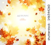background with maple autumn... | Shutterstock .eps vector #146544260