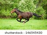 Bay Horse Running At Field In...