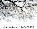 Branches Isolated On White...