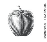 Apple. Hand Drawn Engraving...