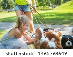 Stock photo woman walking a pack of small dogs cavalier king charles spaniel in park professional dog walker 1465768649