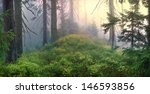 Wild Forests Of The...
