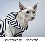 shorthair oriental cat ... | Shutterstock . vector #146599550