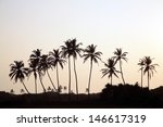 Palm Tree Silhouette  Sunrise...
