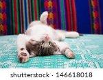 Stock photo small kitten sleeping on the bed 146618018
