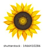 Sunflower Agricultural Plant...