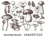 Edible Mushrooms Vector...