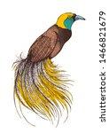 bird of paradise vector...   Shutterstock .eps vector #1466821679