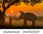 Elephant made merit a monk