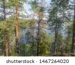 The quiet wild forest and lonely trees on the shore of the Saimaa lake in the Linnansaari National Park in Finland - 11