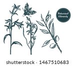 collection of hand drawn...   Shutterstock .eps vector #1467510683