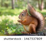 A Squirrel In A Park Sits On A...