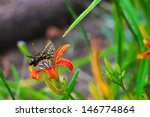butterfly on vivid red flower | Shutterstock . vector #146774864