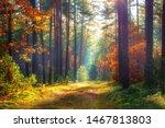 Autumn Nature Landscape. Sunny...