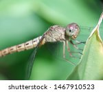 Stock photo dragonfly in the nature dragonfly in the nature habitat beautiful vintage nature scene with 1467910523