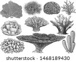 Coral Collection  Illustration  ...