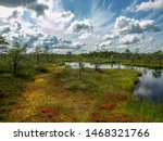 bog pine in backlight, sunny and hot summer day, bog lakes, beautiful clouds and reflections, Latvia