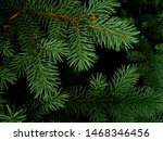 nice fir branches. close up.... | Shutterstock . vector #1468346456