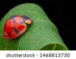 Beautiful lady bug beetle on...