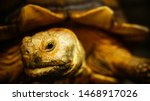 Stock photo tortoise sunbathe on ground with his protective shell african spurred tortoise in the garden 1468917026