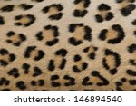 Small photo of Leopard Skin - Real skin and pattern from Wild Africa, photographed in Namibia - Beauty of the spotted cat. Dangerous, but oh so beautiful.