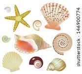 set of seashells   Shutterstock .eps vector #146900774