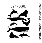 Cetacean silhouette vector illustration. Set of hand drawn sea animals. Whale and seal black shadow.