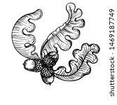 oak  leaves and acorns  vector... | Shutterstock .eps vector #1469187749