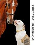 American Bulldog And Chestnut...