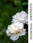 A closeup floral macro...