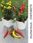 Decorative Pepper Plants In...