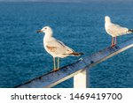 Seagull Sitting On Pier Railing