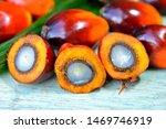African Oil Palm Elaeis...