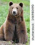 A Brown Bear Brown Bear