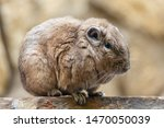 Common Gundy In Artis Zoo...