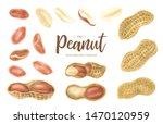 peanut. groundnut whole  ... | Shutterstock . vector #1470120959