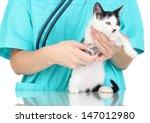 Stock photo veterinarian examining kitten isolated on white 147012980