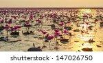 Lotus Field Lake First Large I...