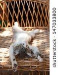 Stock photo small kitten sleeping on the wooden armchair 147033800