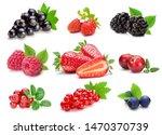 set of various wild and garden...   Shutterstock . vector #1470370739