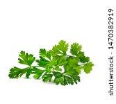 fresh green plant  nutritious ... | Shutterstock .eps vector #1470382919