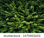 beautiful green leaves texture... | Shutterstock . vector #1470402653