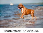 beautiful american... | Shutterstock . vector #147046256