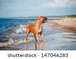 beautiful american... | Shutterstock . vector #147046283