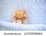 Stock photo baby cat sleeping ginger kitten on couch under knitted blanket domestic animal sleep and cozy 1470598883