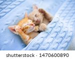 Stock photo baby cat sleeping ginger kitten on couch under knitted blanket two cats cuddling and hugging 1470600890