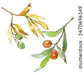 olive branch with black and... | Shutterstock . vector #1470696149