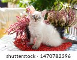 Stock photo adorable little siamese kitten with violet flowers 1470782396