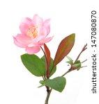 Peach Flowers On A White...