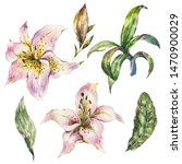 set of white lily  watercolor... | Shutterstock . vector #1470900029